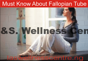A TO Z QUESTION ABOUT FALLOPIAN TUBE